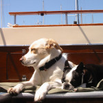 Sailing with a Pet on Board Your Boat