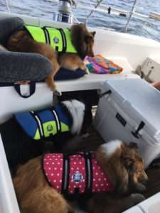 dogs boats