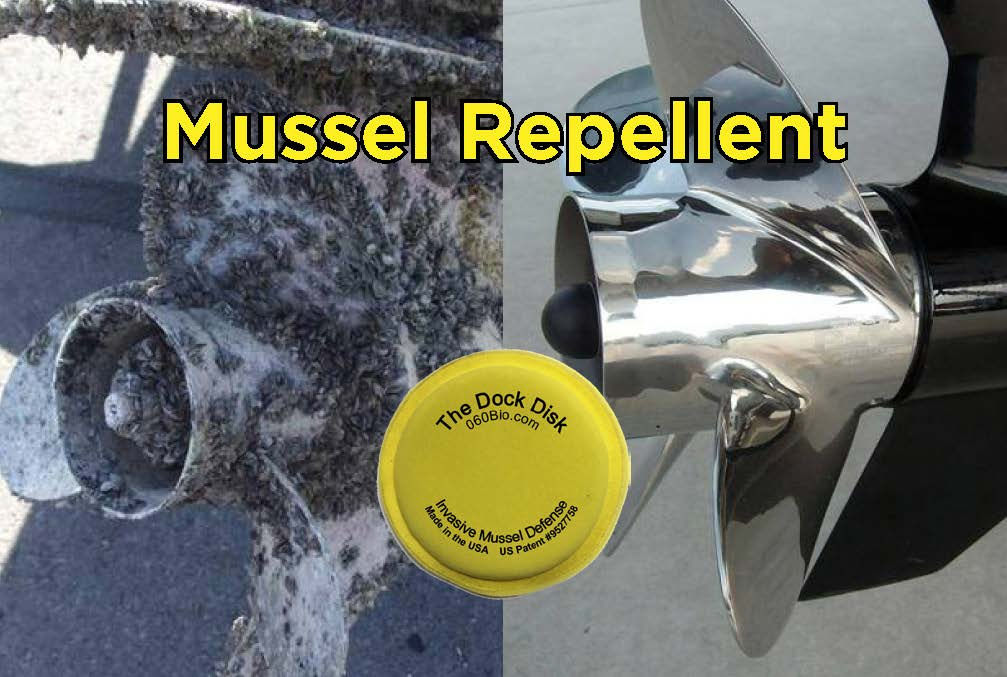 Keep Your Boat and Dock Zebra and Quagga Mussel Free | My